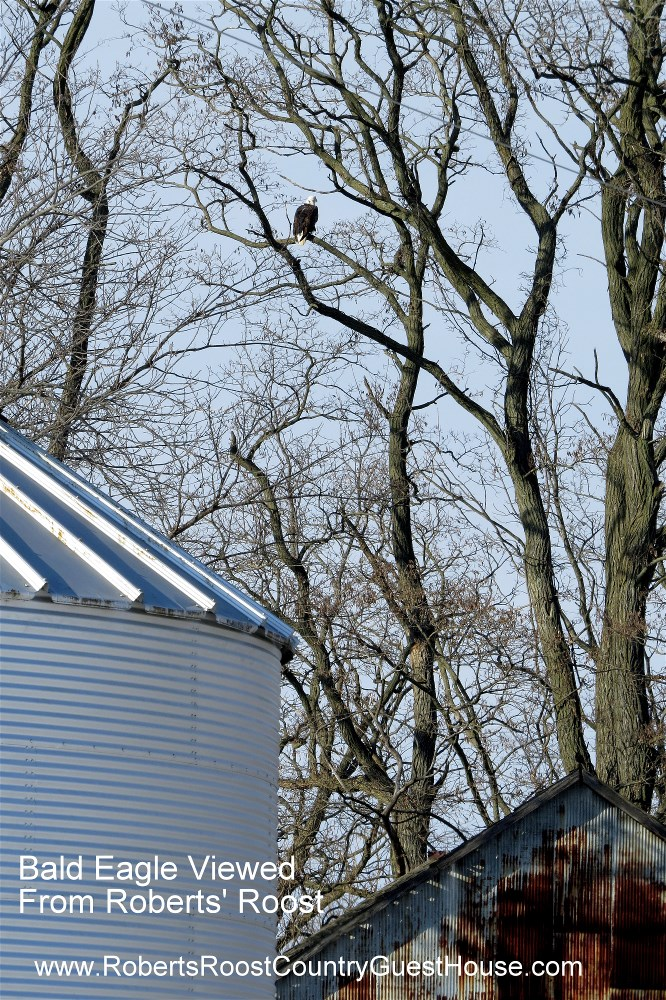 Bald Eagle on the Original Roberts' Farm