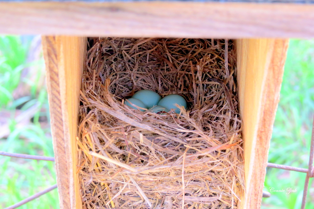 Four Eggs in the Box on April 29th 2015